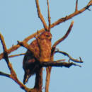 falco-animali-parco-bologna