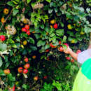 summer-camp-frutteti